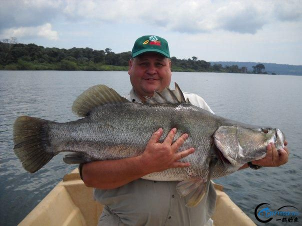 曾经是泛滥成灾的入侵鱼种,结果惨被吃成依靠政府保护的鱼种-32.jpg