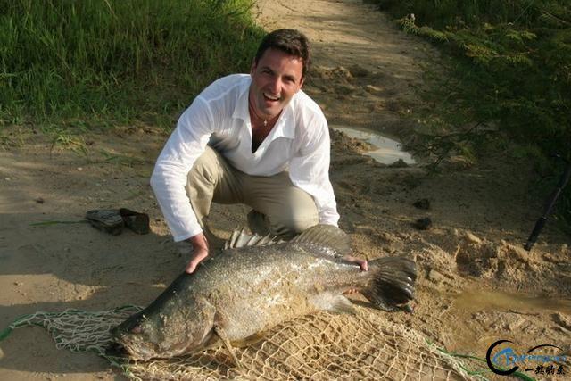 曾经是泛滥成灾的入侵鱼种,结果惨被吃成依靠政府保护的鱼种-34.jpg
