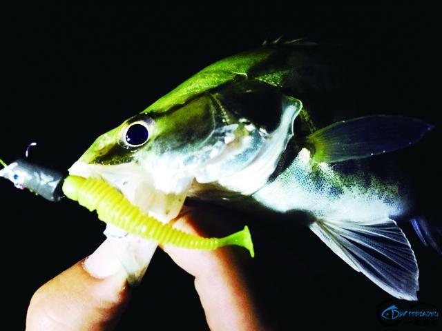 钓鳜鱼的好时节可不能错过,野生大鱼一条接着一条……-3.jpg