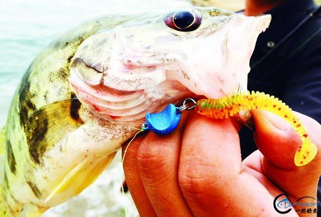 钓鳜鱼的好时节可不能错过,野生大鱼一条接着一条……-21.jpg