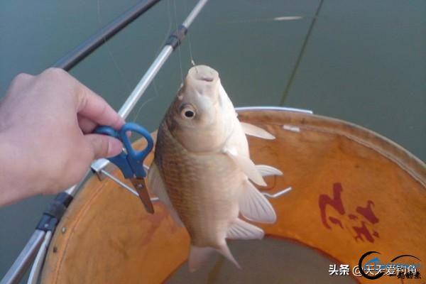 野钓渔获不佳,往往出在中鱼率上,几个小技巧让你中鱼率翻倍-5.jpg