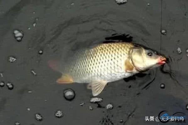 野钓渔获不佳,往往出在中鱼率上,几个小技巧让你中鱼率翻倍-1.jpg
