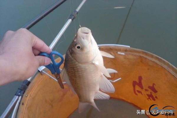 野钓实用套路,有效提升中鱼率,渔获轻松翻几倍!-5.jpg