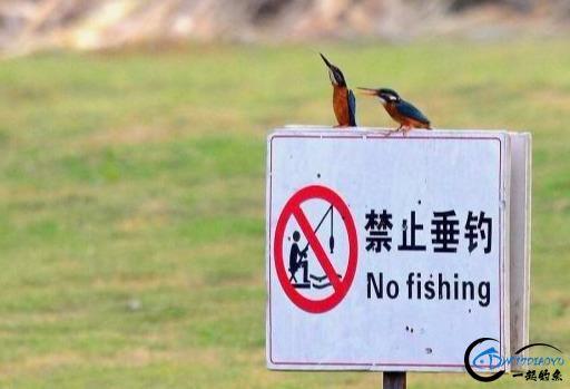 为什么有些水库禁止钓鱼,钓鱼人招谁惹谁了?看看钓友们怎么看-1.jpg