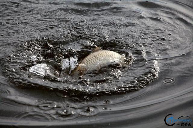 无兄弟,不钓鱼,致陪伴在钓鱼路上的兄弟-13.jpg