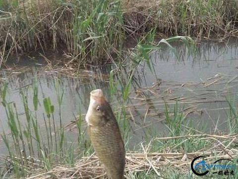 钓鱼新手遇见这些问题很正常,知道怎么回事,多练习几次就可以了-5.jpg