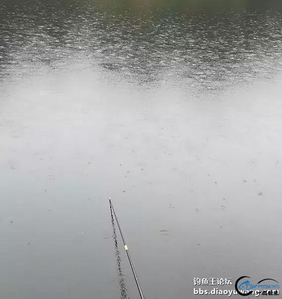 """钓鱼:雨中""""流年""""帮大忙,助我狂拉满箩筐-5.jpg"""