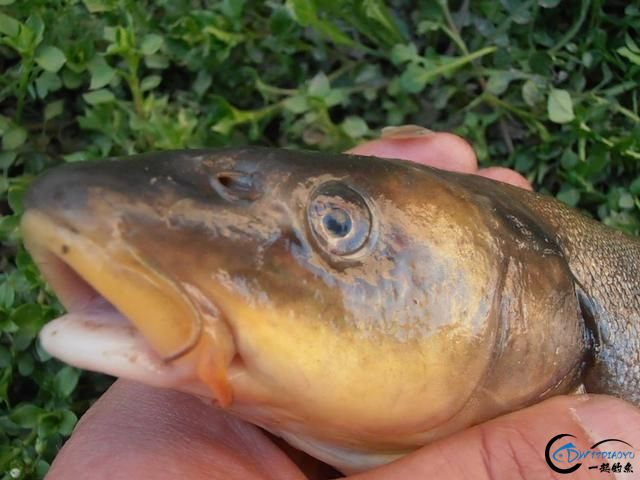 中国这个神秘的湖泊中蕴藏了8亿多公斤的鱼类,却没人敢去捞-15.jpg