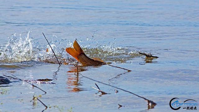 中国这个神秘的湖泊中蕴藏了8亿多公斤的鱼类,却没人敢去捞-11.jpg