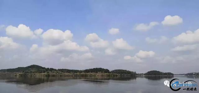 两天60斤渔获,绵阳鲁班水库老板表示近期最好鱼情-1.jpg