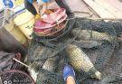 白龙湖近期筏钓路亚效果不佳,海竿收获不错