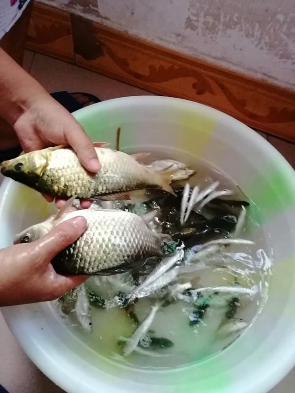 近期渔获3