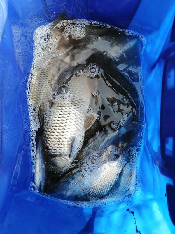 近期渔获1