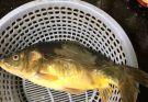 请问一下这是什么渔,昨天长江边边钓的