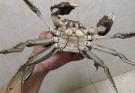 第一次野河沟钓到大闸蟹