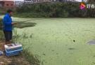 谷麦钓意欲横扫乡村野塘