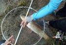 第一次发帖,发点今年升钟湖和近段时间同兴嘉陵江的渔获