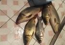 分享一下上周五的垂钓心得和鱼获——伦哥谷麦