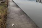汉丰湖可钓鱼区域