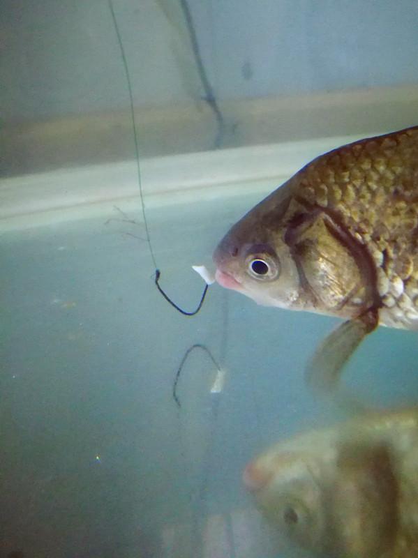 鱼吃钩尖,大小通杀。