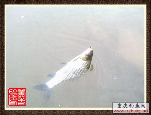 201210281059_副本.jpg