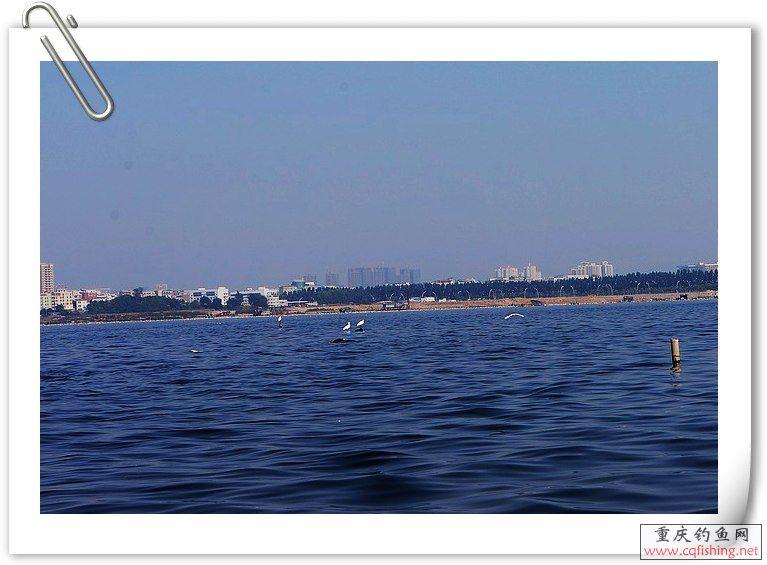 海鸥3.jpg